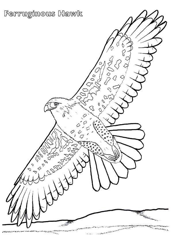 hawk-coloring-page-0008-q2