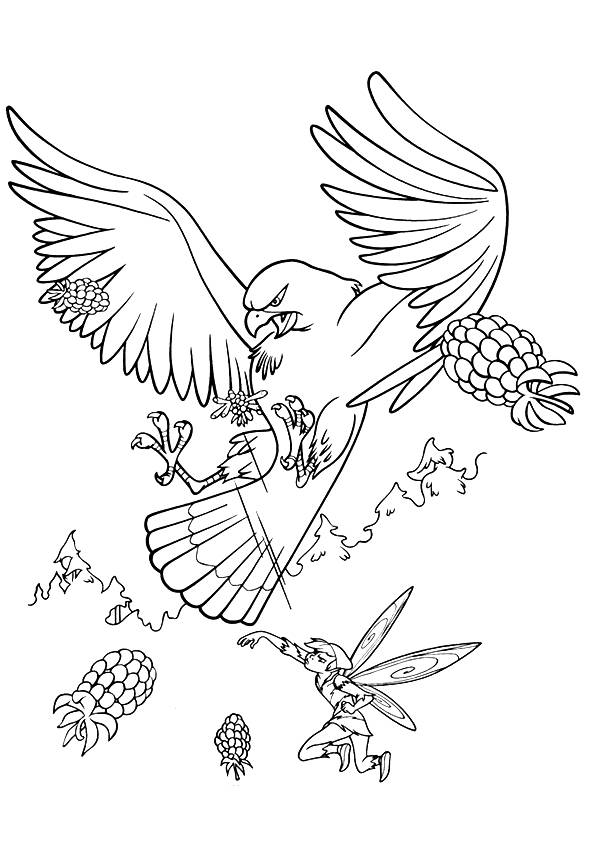 hawk-coloring-page-0010-q2