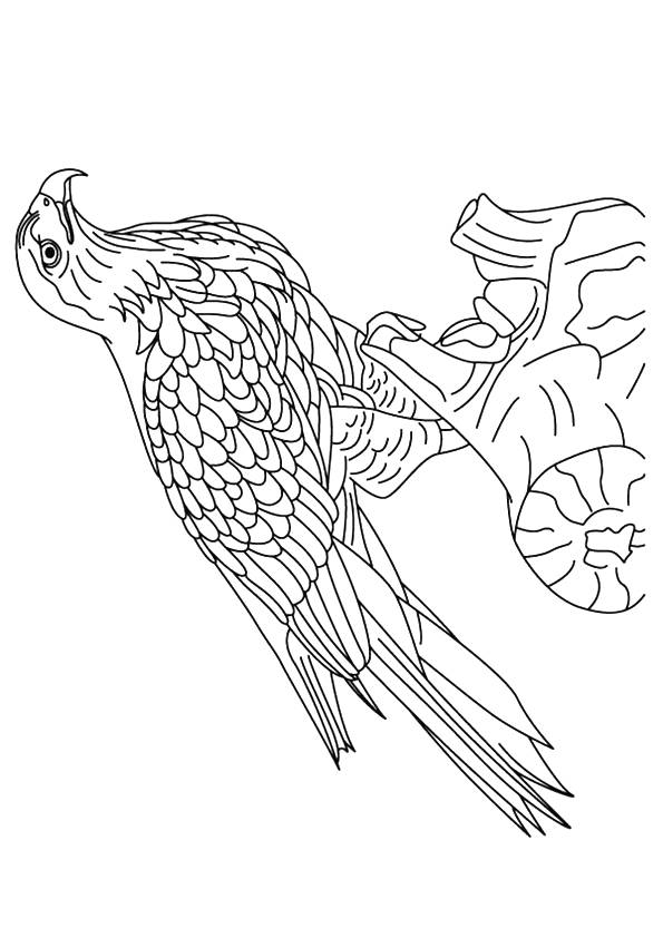 hawk-coloring-page-0013-q2