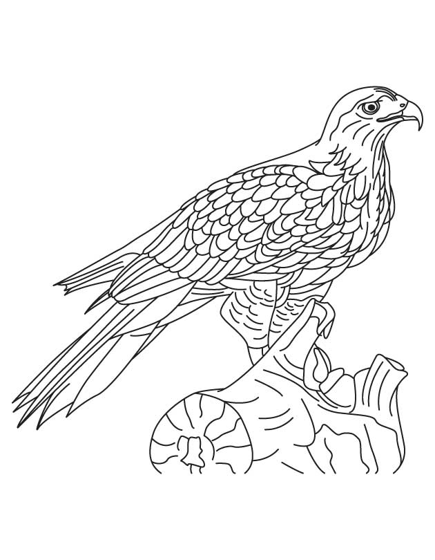 hawk-coloring-page-0014-q1