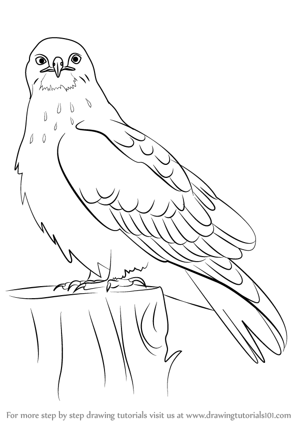 hawk-coloring-page-0015-q1