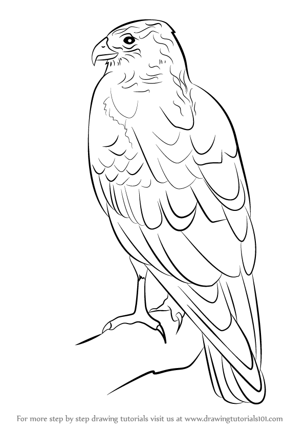 hawk-coloring-page-0017-q1