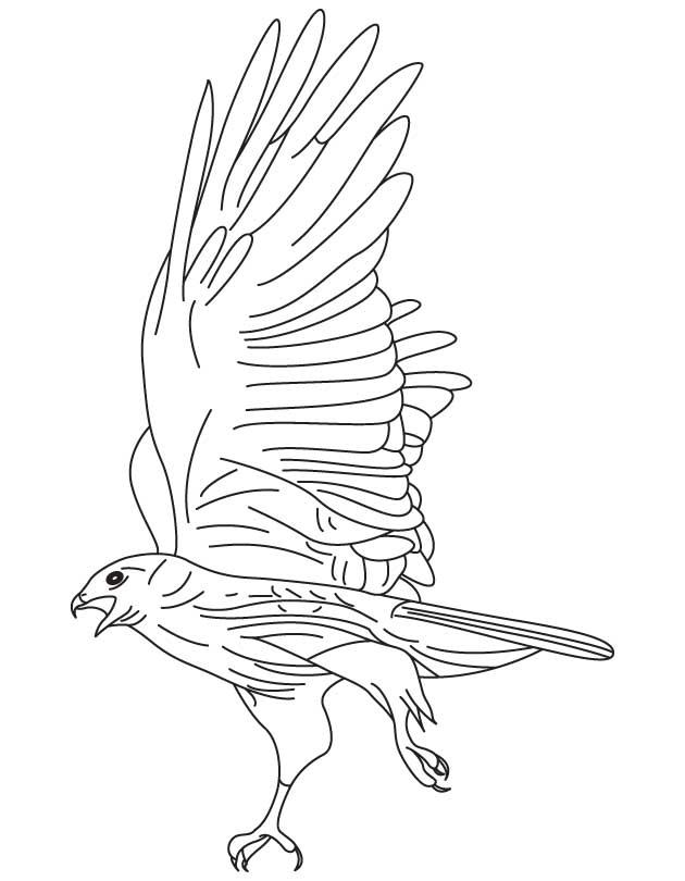 hawk-coloring-page-0025-q1