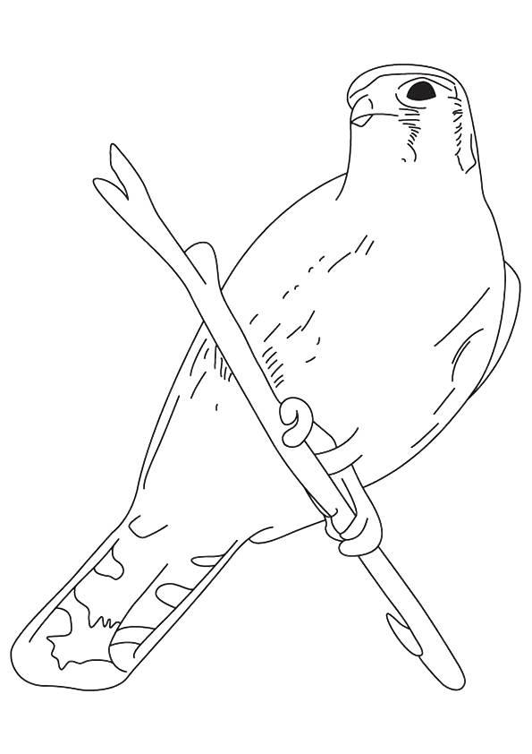 hawk-coloring-page-0026-q2