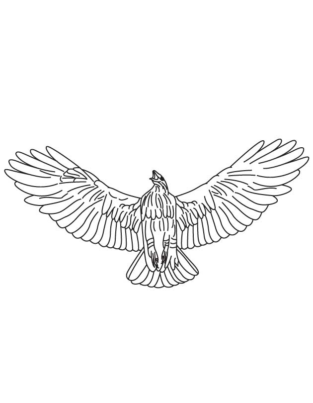 hawk-coloring-page-0027-q1