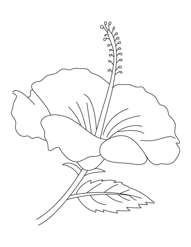hibiscus-coloring-page-0004-q1
