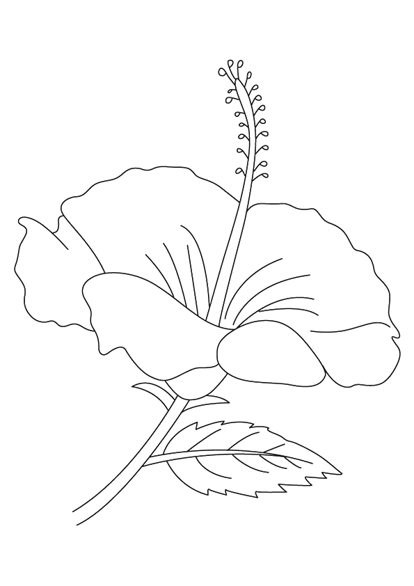hibiscus-coloring-page-0006-q2