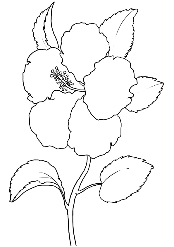 hibiscus-coloring-page-0007-q2