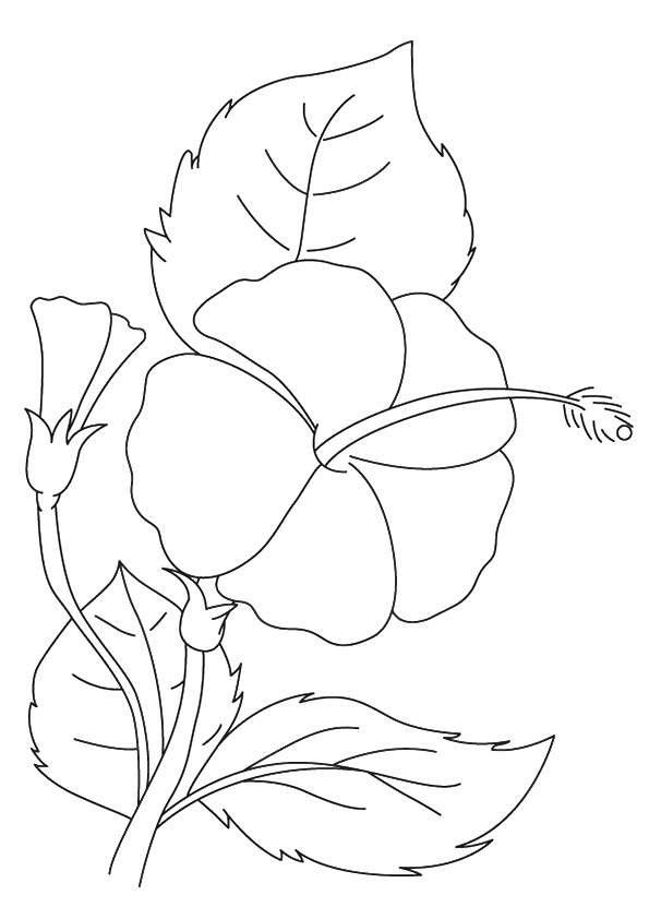 hibiscus-coloring-page-0009-q2