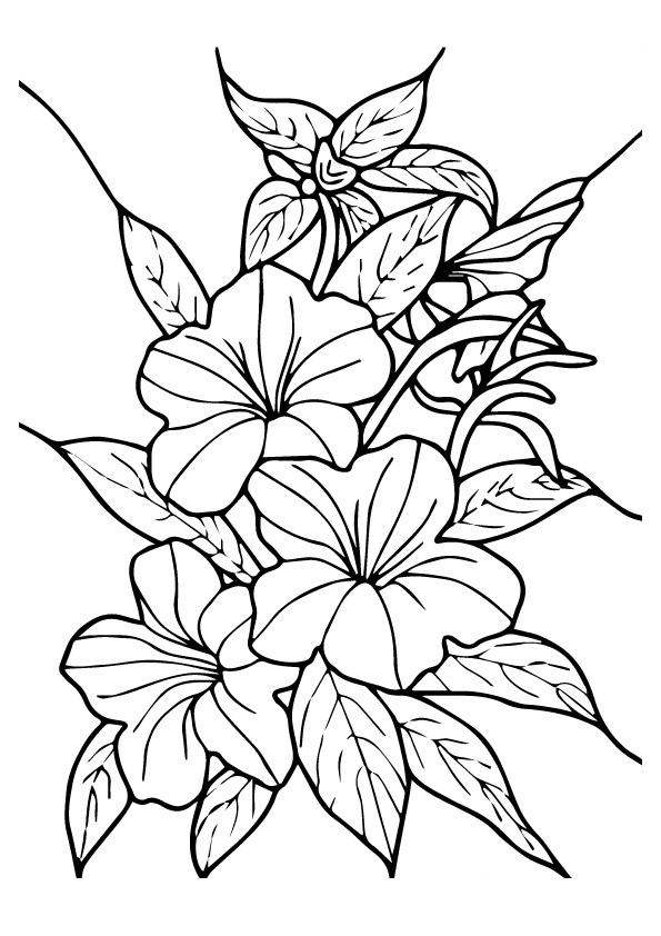 hibiscus-coloring-page-0013-q2