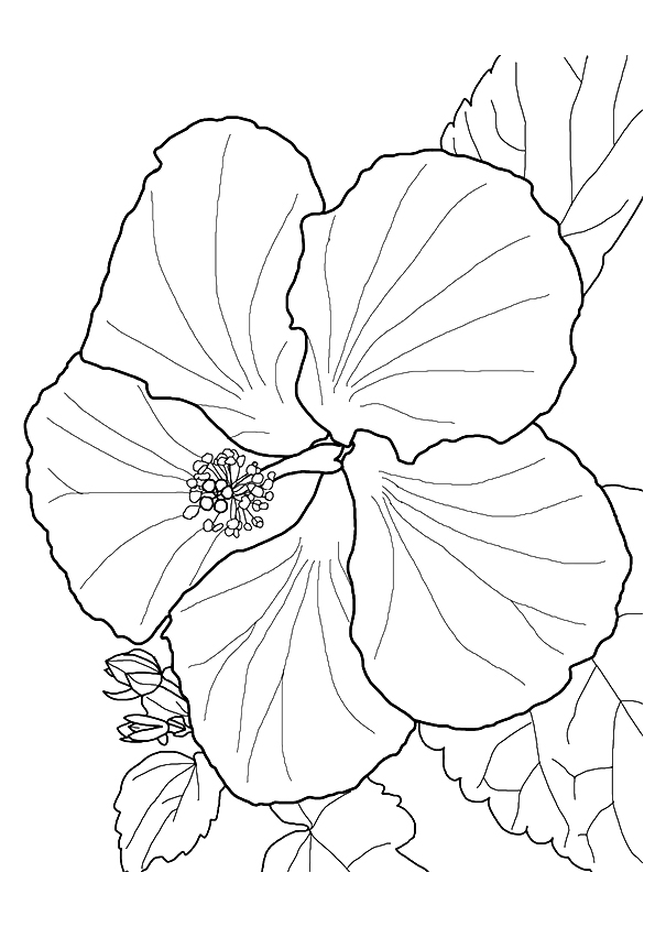 hibiscus-coloring-page-0015-q2