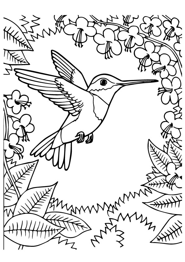 ▷ Hummingbird: Coloring Pages & Books - 100% FREE and ...