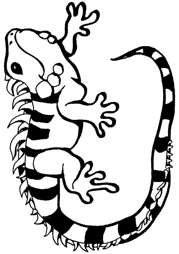 Iguana Coloring Pages Books 100 Free And Printable