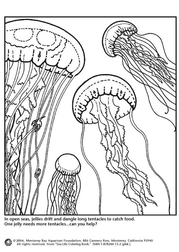 jellyfish-coloring-page-0005-q1