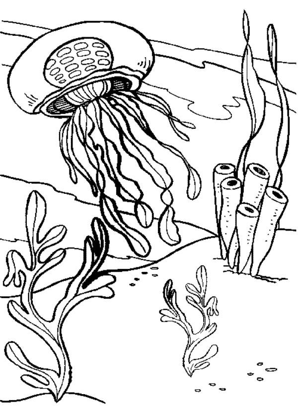 jellyfish-coloring-page-0009-q1