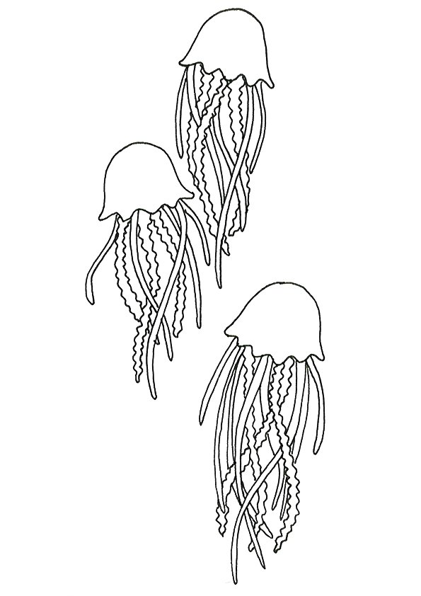 jellyfish-coloring-page-0023-q2