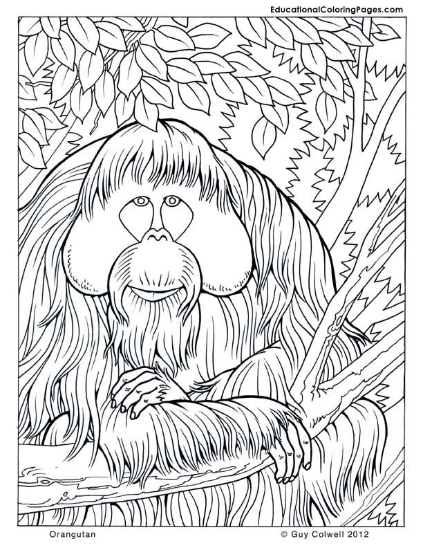 jungle-coloring-page-0003-q1