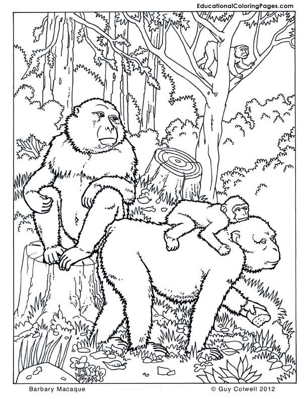 jungle-coloring-page-0005-q1