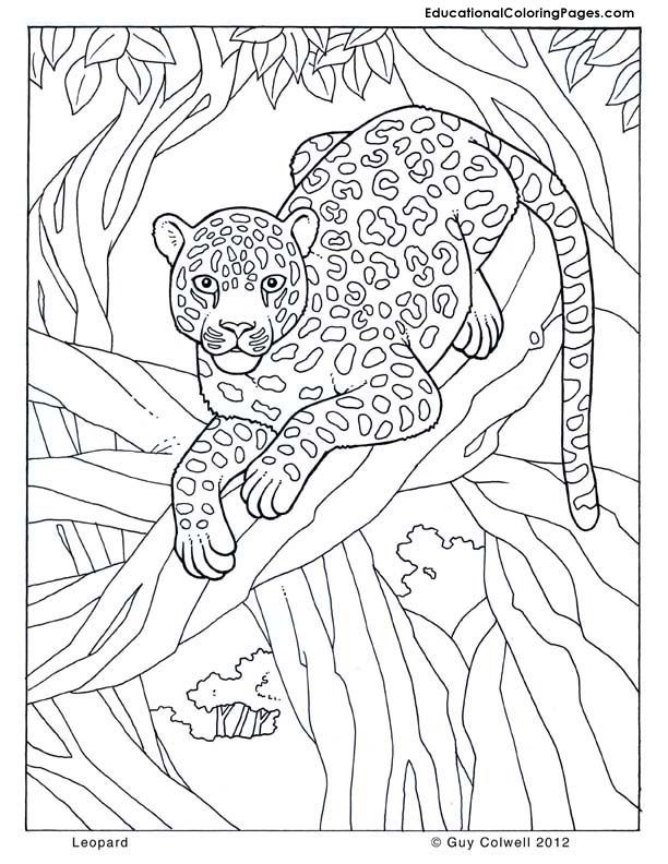 jungle-coloring-page-0009-q1