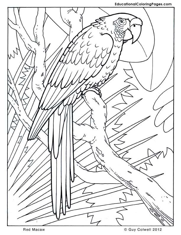 jungle-coloring-page-0011-q1