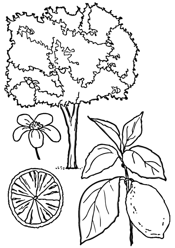 lemon-coloring-page-0003-q2