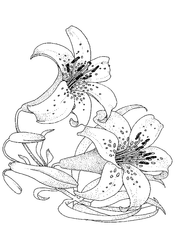 lily-coloring-page-0003-q2