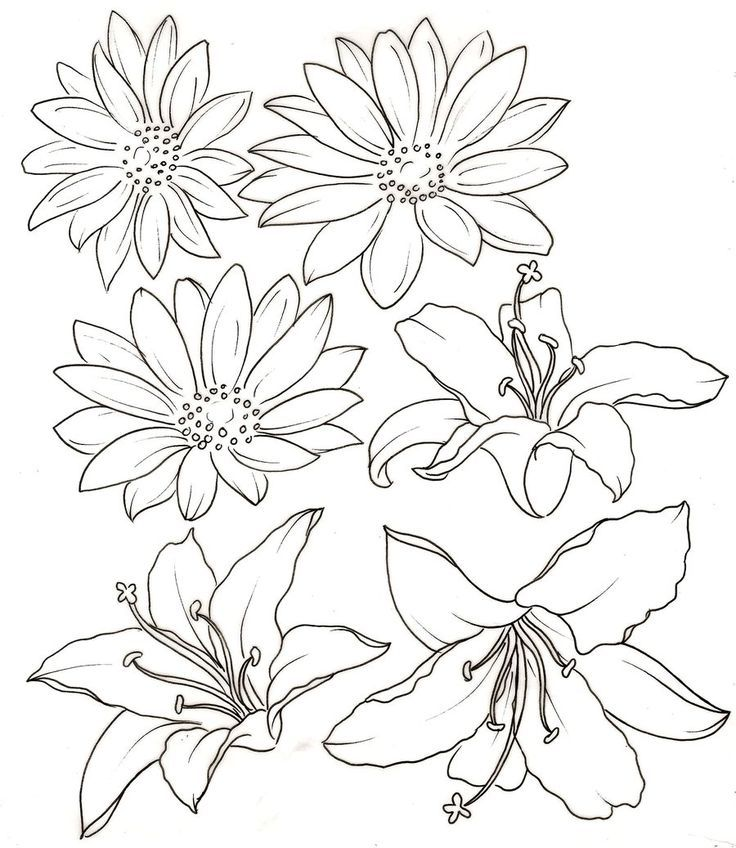 lily-coloring-page-0005-q1