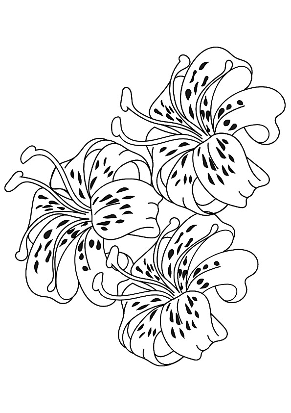 lily-coloring-page-0008-q2