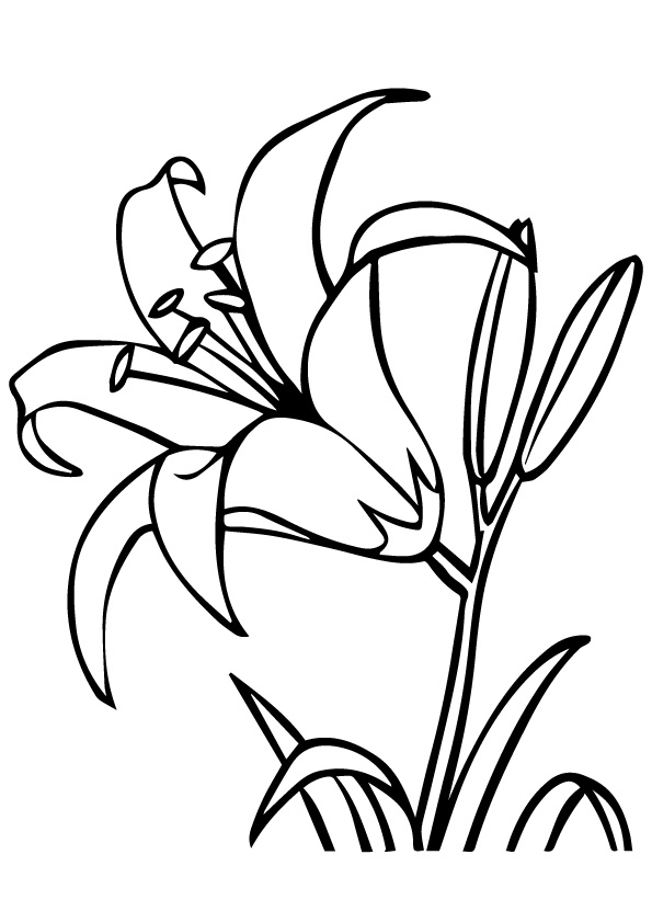 lily-coloring-page-0010-q2