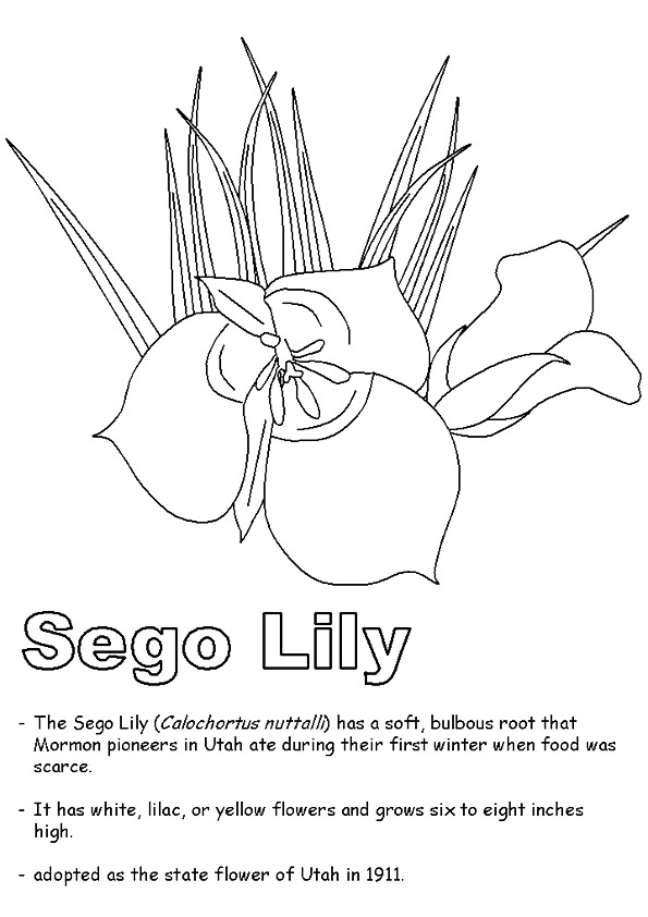 lily-coloring-page-0011-q2