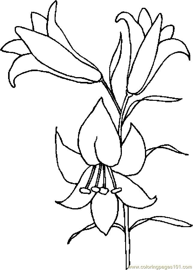 lily-coloring-page-0016-q1