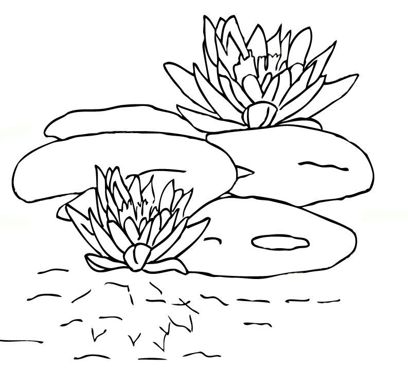 lily-coloring-page-0017-q1