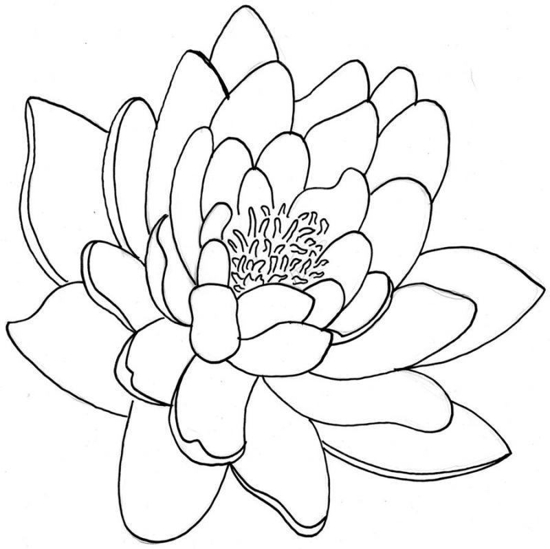 lily-coloring-page-0018-q1