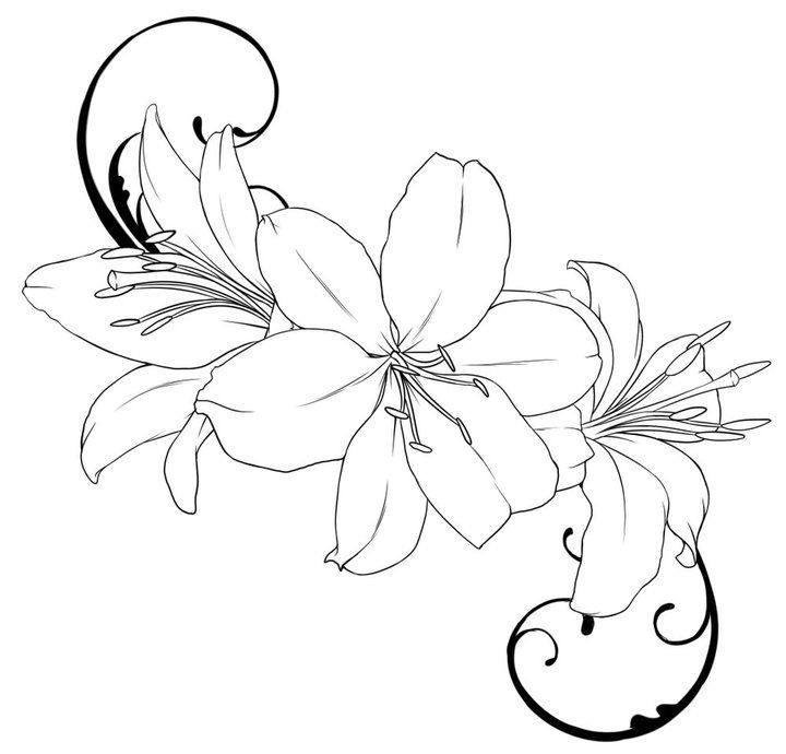 lily-coloring-page-0025-q1