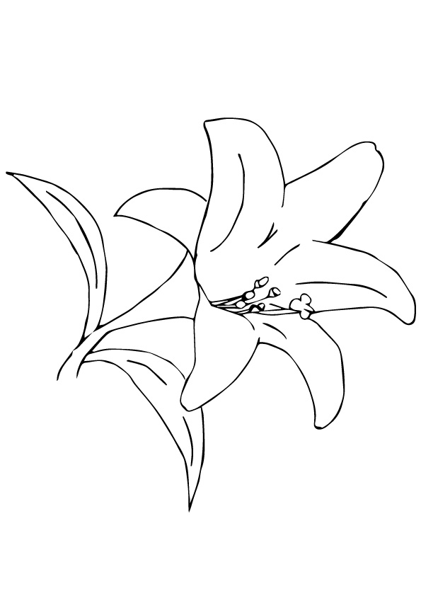 lily-coloring-page-0026-q2