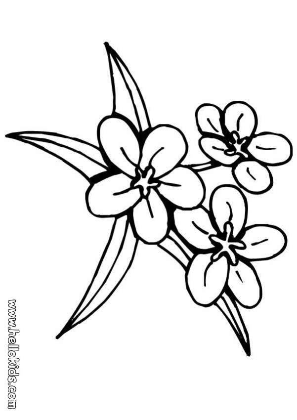 lily-coloring-page-0032-q1