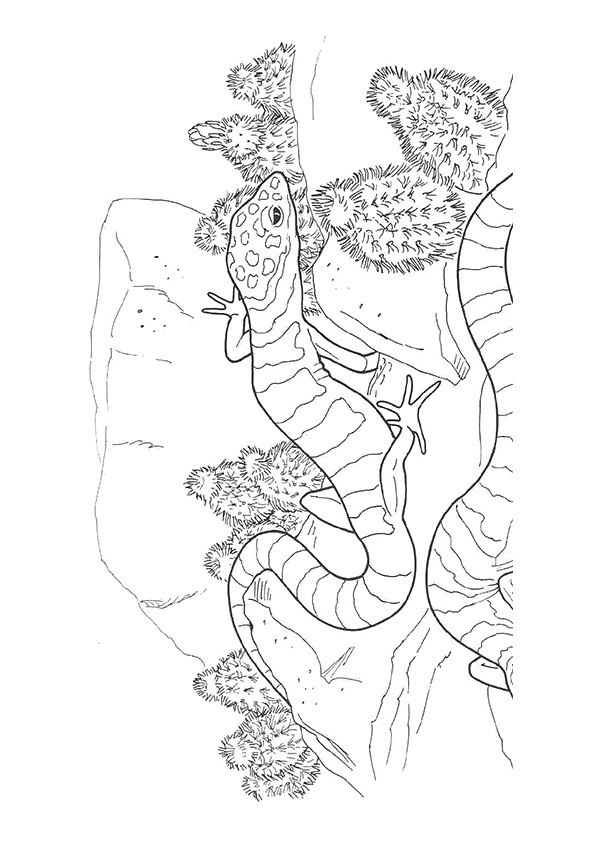 lizard-coloring-page-0012-q2