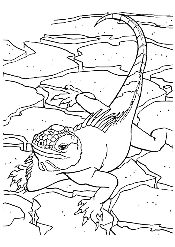 lizard-coloring-page-0014-q2