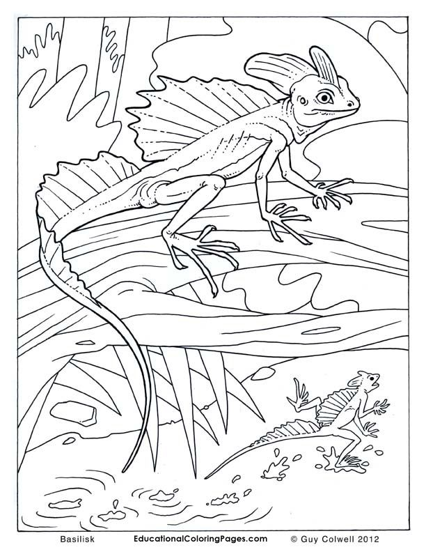 lizard-coloring-page-0016-q1