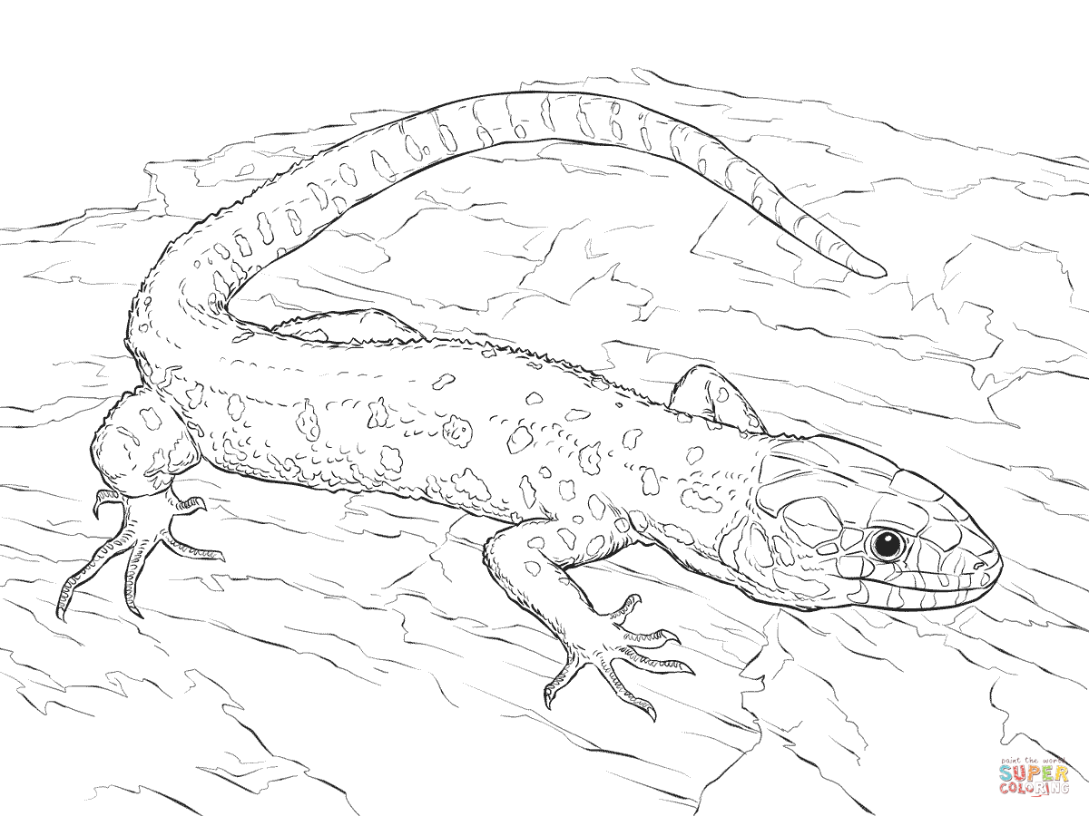 lizard-coloring-page-0030-q1