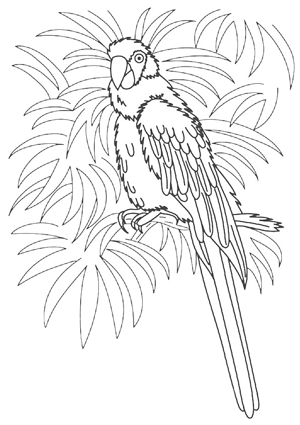 macaw-coloring-page-0003-q2