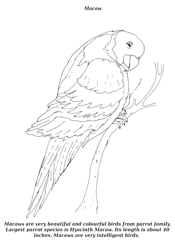 macaw-coloring-page-0004-q2