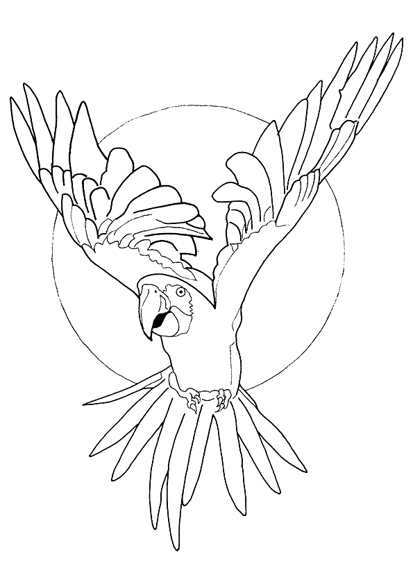 macaw-coloring-page-0005-q2