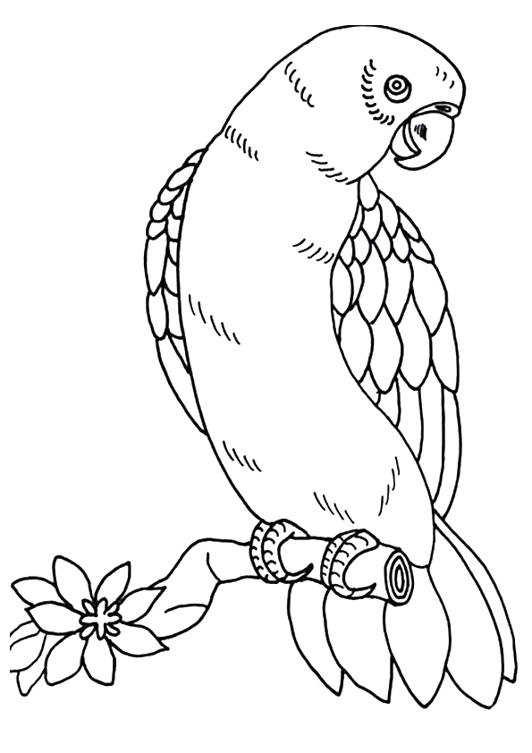 macaw-coloring-page-0006-q2