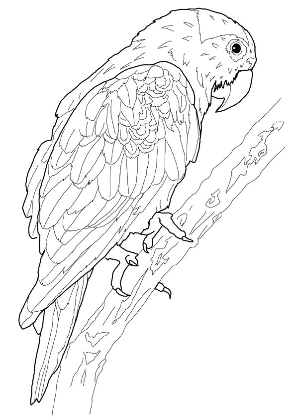 macaw-coloring-page-0007-q2