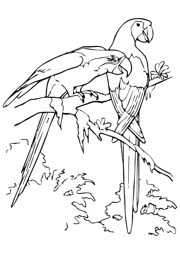 macaw-coloring-page-0008-q2