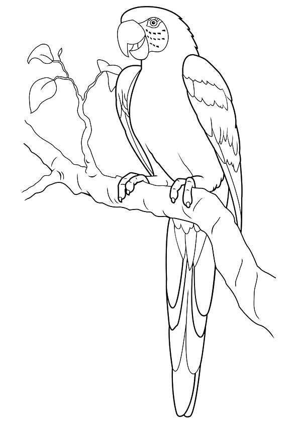 macaw-coloring-page-0011-q2
