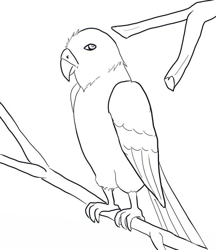 macaw-coloring-page-0012-q1