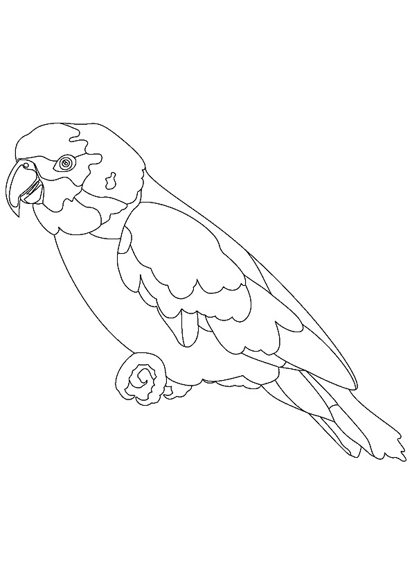 macaw-coloring-page-0014-q2