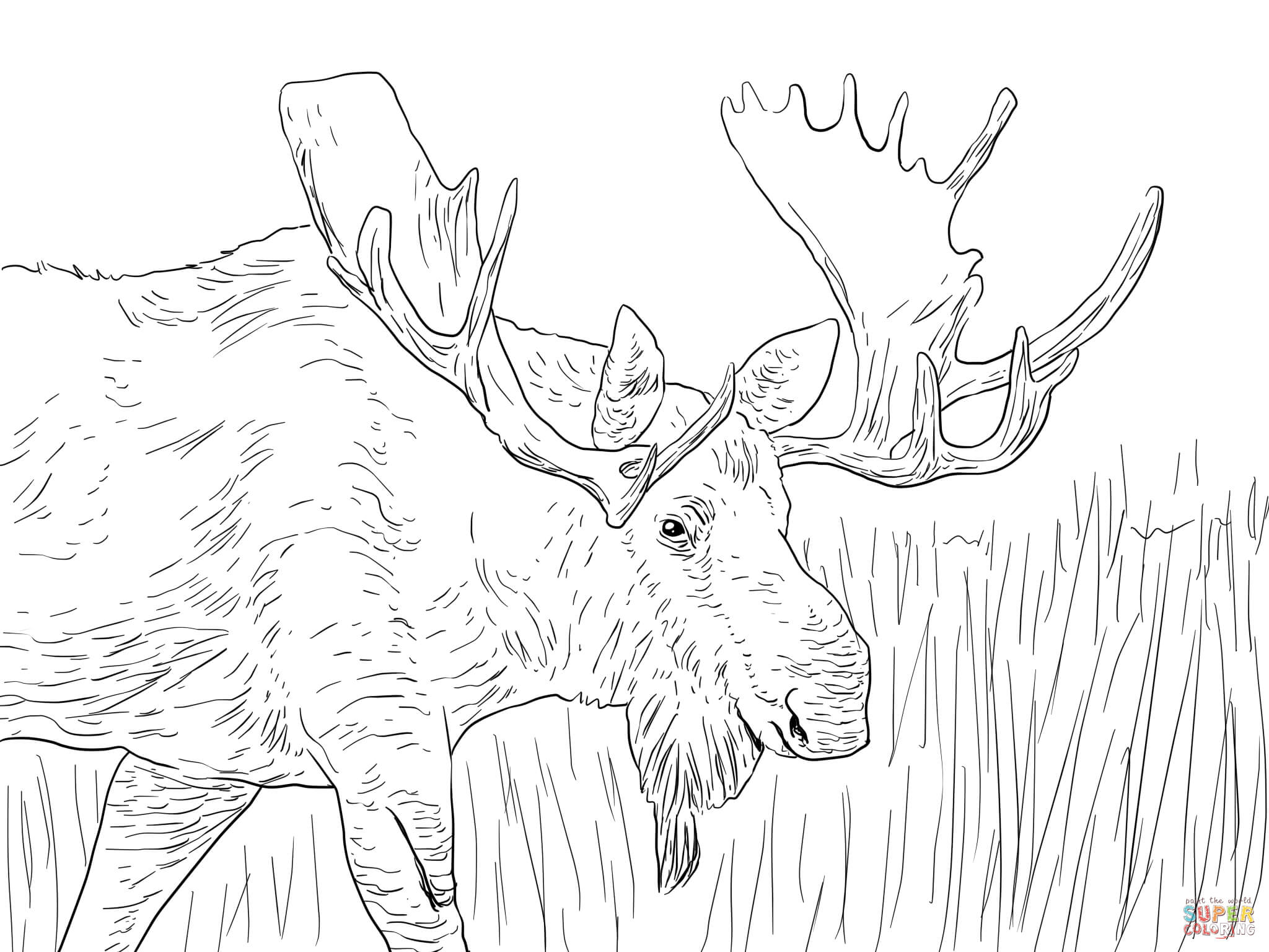 moose-coloring-page-0001-q1
